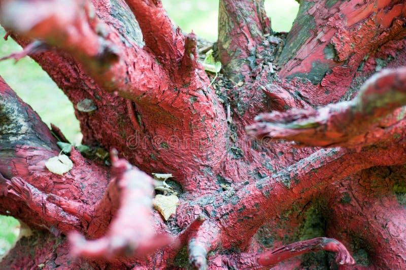Raíz pintada del árbol fotografía de archivo