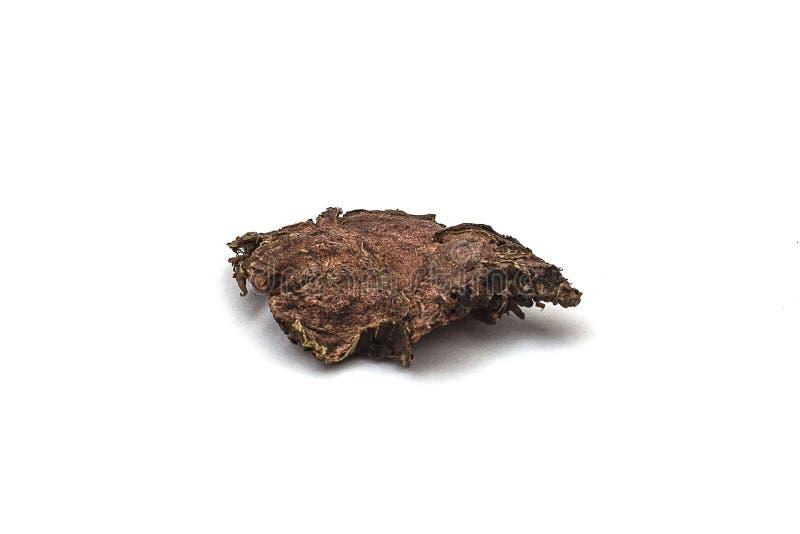 Raíz seca del rosea de Rhodiola en un fondo aislado blanco imagen de archivo libre de regalías