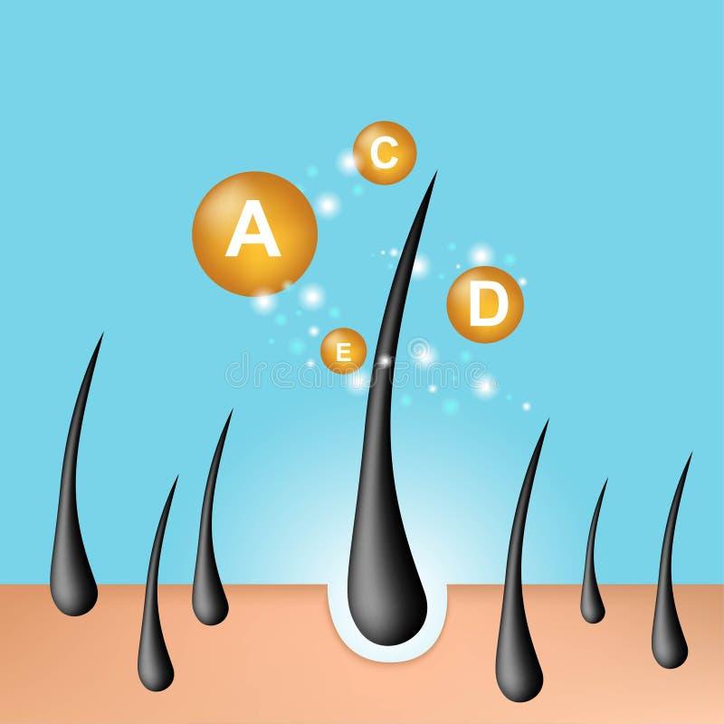 Ra?z del pelo Pelo hidratante Suero del cuidado del cabello, aceite, vitamina A, C, D y E, diagnósticos del folículo Piel de la a ilustración del vector