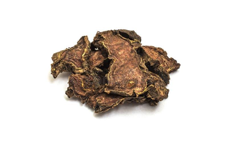 Ra?z seca del rosea de Rhodiola en un fondo aislado blanco fotografía de archivo libre de regalías