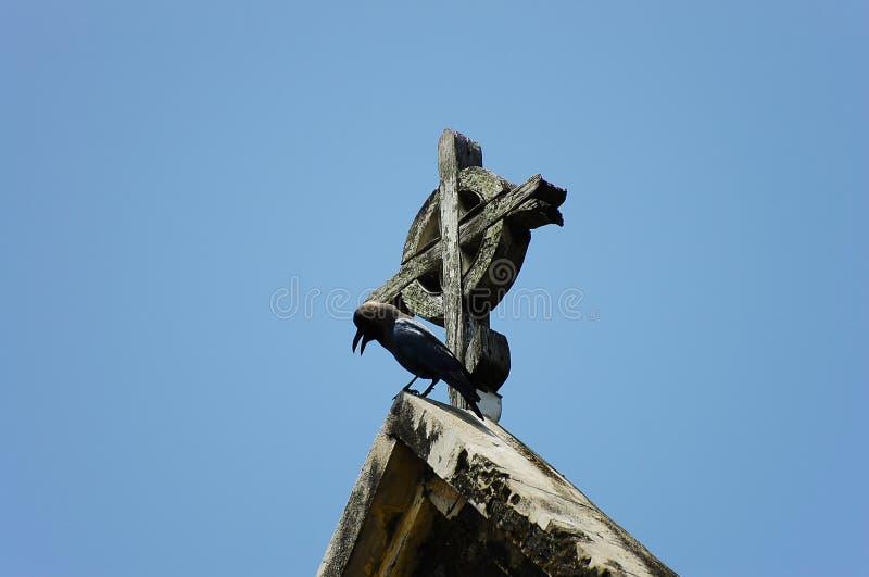 Raaf op de Kerkkruis van Christus - Zanzibar - Tanzania royalty-vrije stock fotografie