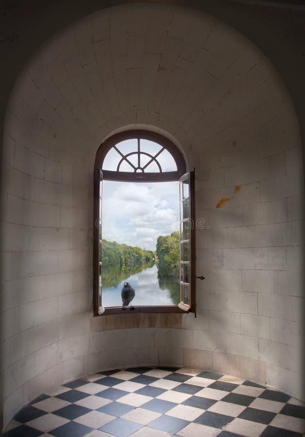 Raaf op een venster royalty-vrije stock afbeeldingen