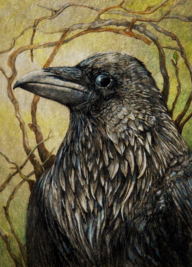 Raaf of zwarte kraai stock illustratie