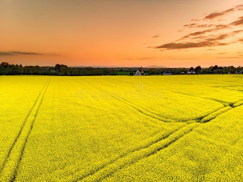 Raapzaadgebied die in heldere gele kleuren in Iers platteland op de lenteavond tot bloei komen royalty-vrije stock foto