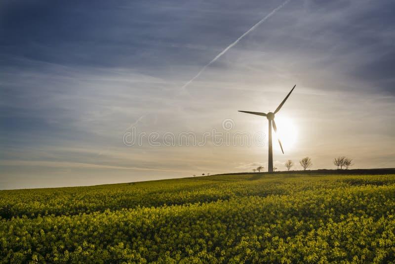 Raapzaadgebied op zonnige dag met windturbine op achtergrond royalty-vrije stock foto