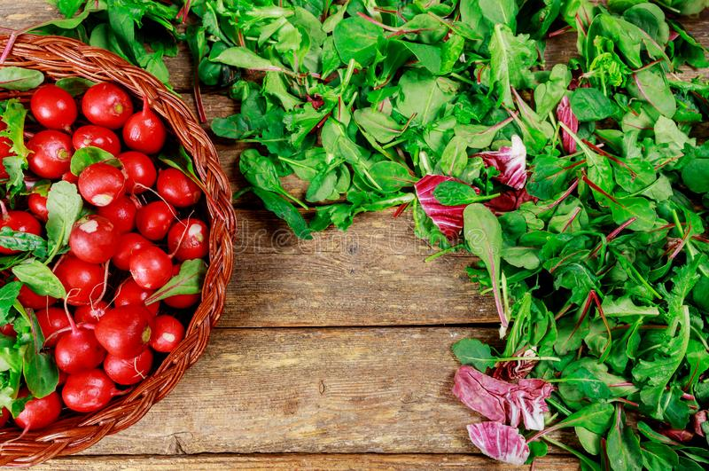 Rabanete orgânico na salada dos espinafres da cesta e da mola imagens de stock royalty free