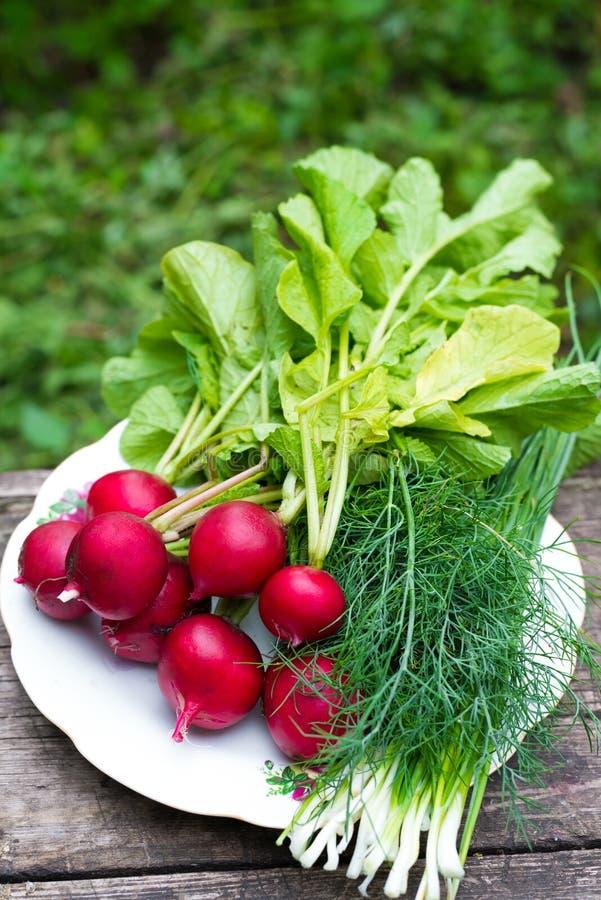 Rabanetes novos e cebolas verdes fotos de stock royalty free
