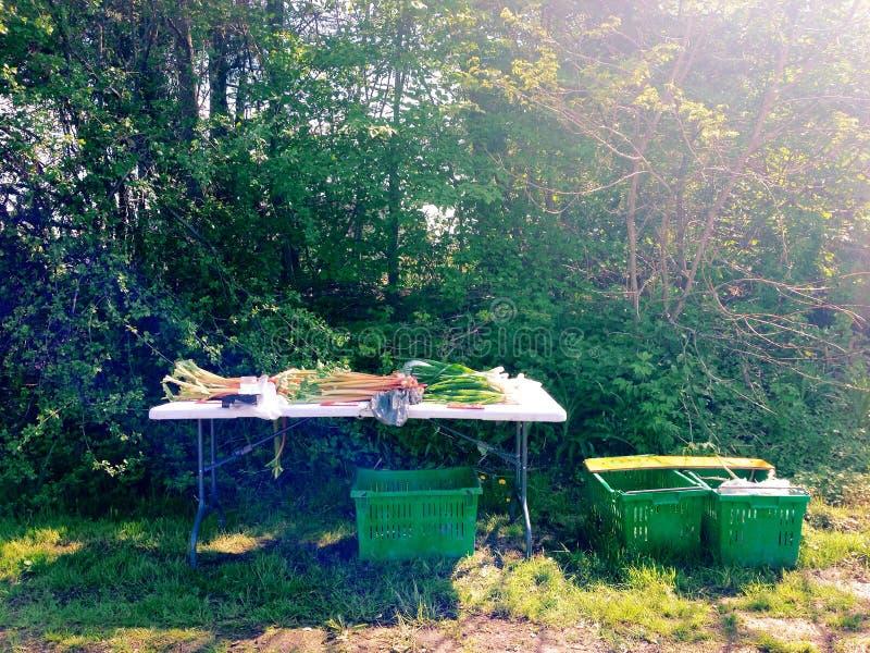Rabarbarowe i zielone cebule dla sprzedaży przy kraju gospodarstwa rolnego stojakiem zdjęcie stock