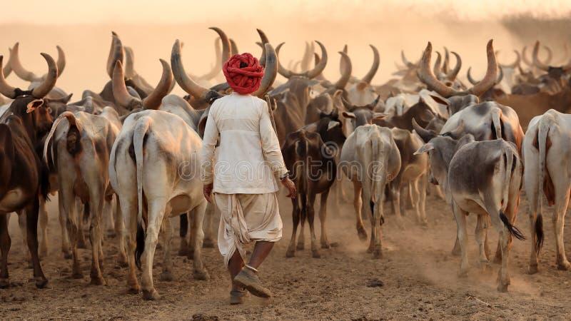 Rabari herder in het district van Kutch, India royalty-vrije stock foto's