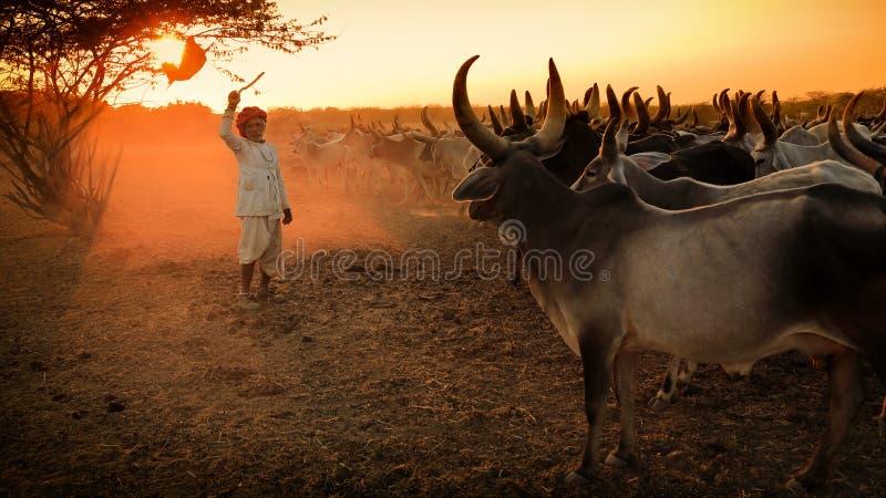 Rabari-Hirte im Bezirk von Kutch, Indien lizenzfreie stockbilder