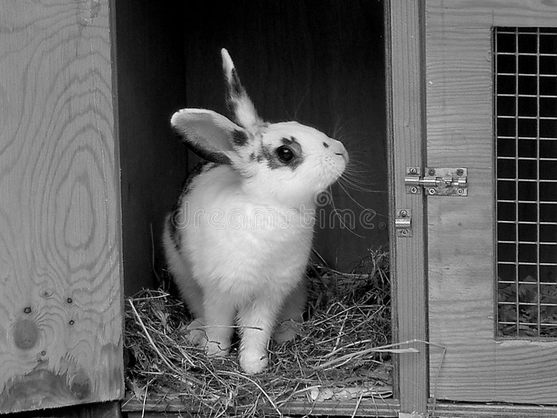 Download Rabbit stock image. Image of cute, black, nature, animals - 1927