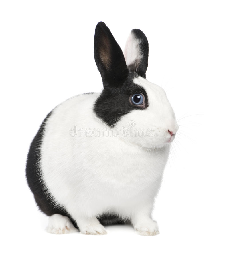Rabbit (11 months) royalty free stock image