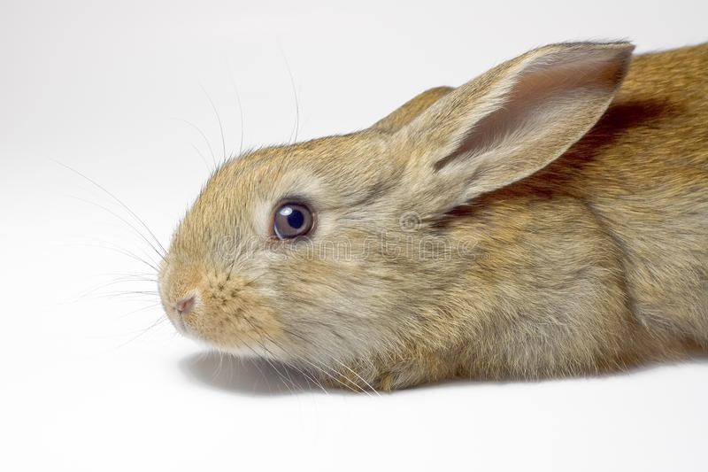 Rabbit 13 stock photo