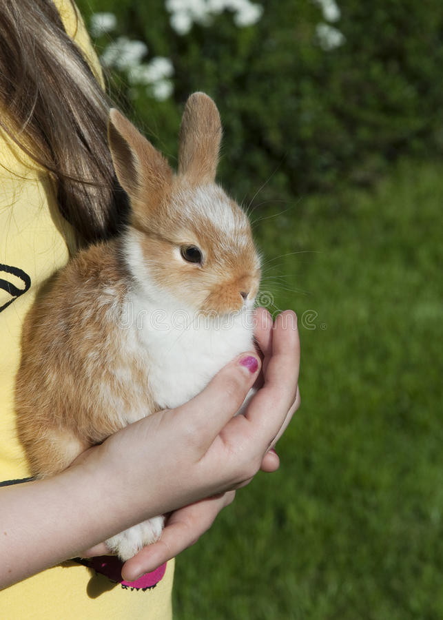 Download Rabbit stock image. Image of hold, girl, domestic, fauna - 14291039
