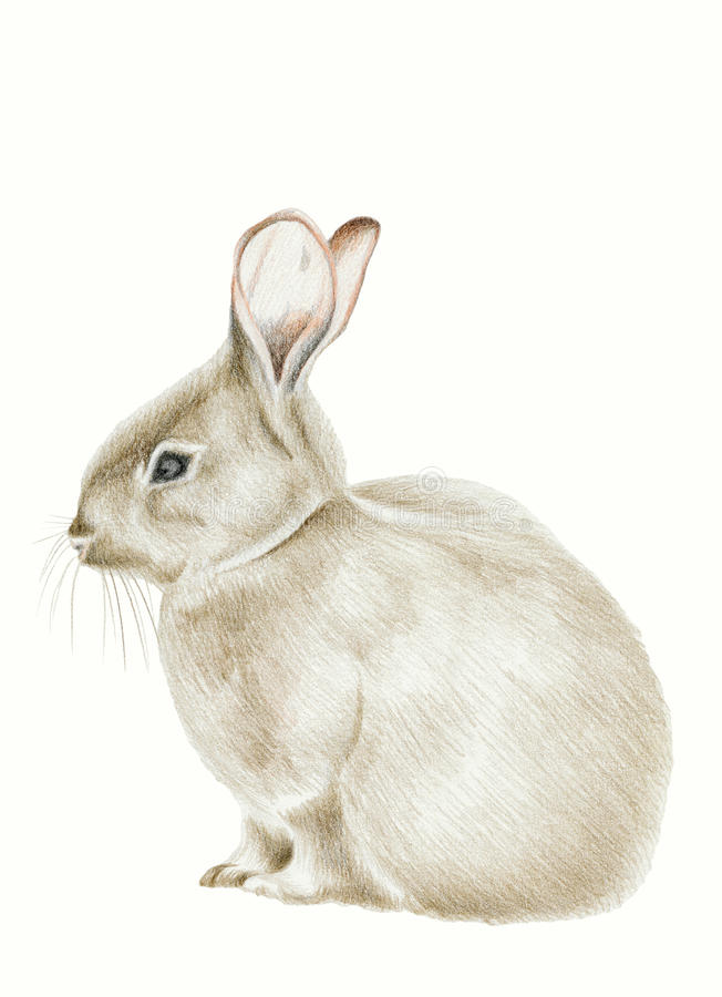 Download Rabbit stock illustration. Image of illustrations, cute - 15867874