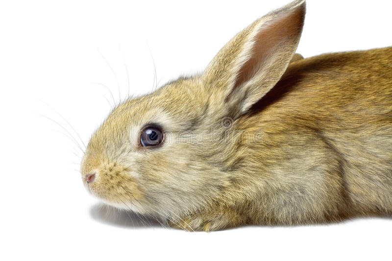 Rabbit 17 stock image
