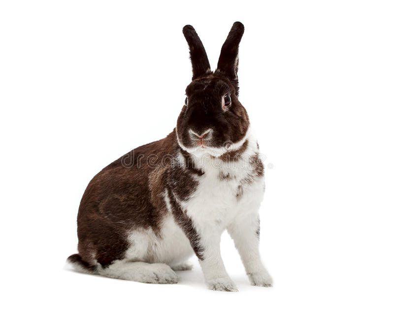 Download Rabbit stock photo. Image of head, fourth, nobody, domestic - 17377106