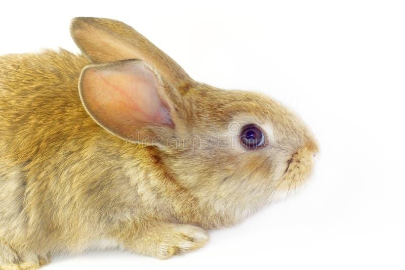 Rabbit 18 stock image