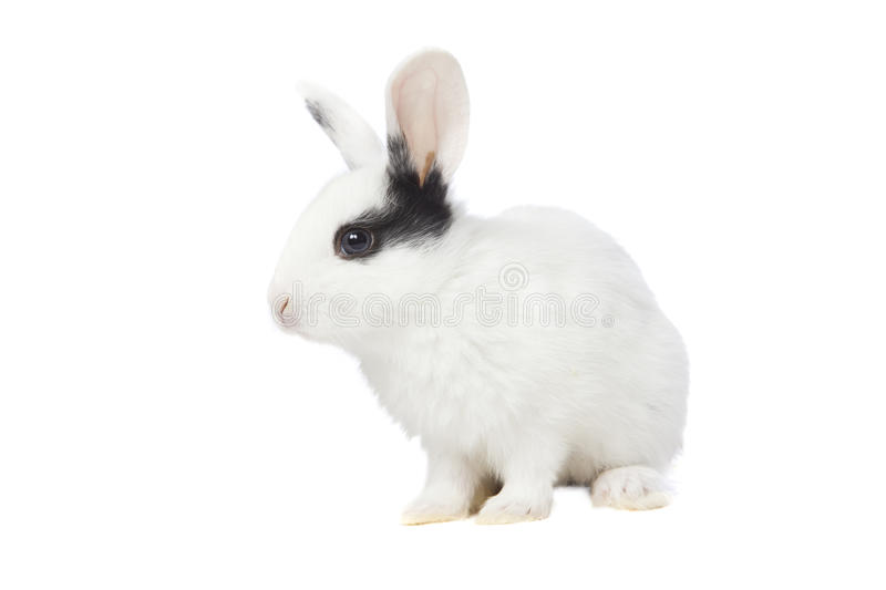 Download Rabbit Royalty Free Stock Photos - Image: 18196978