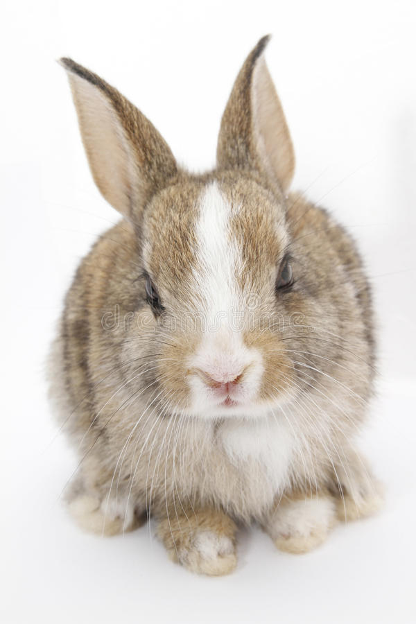 Download Rabbit stock photo. Image of small, image, mammal, alive - 18355372