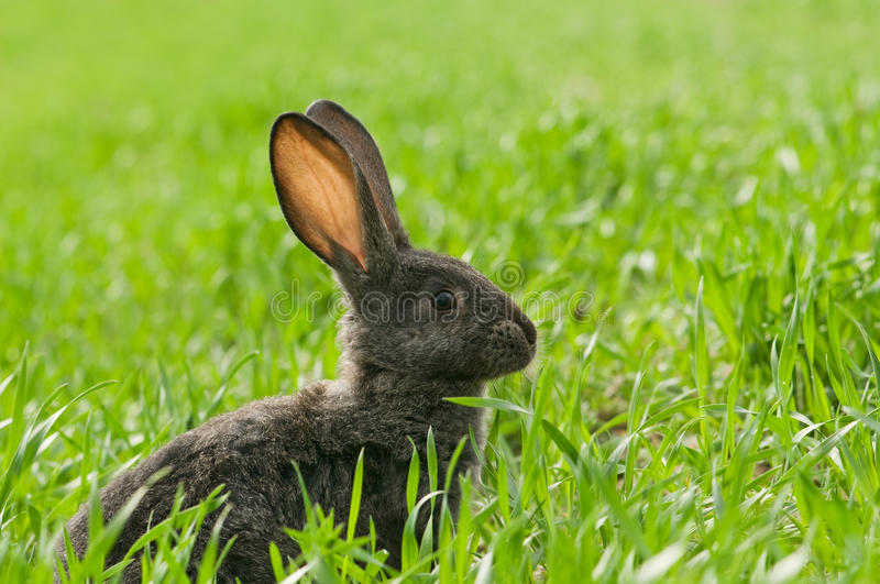 Download Rabbit stock image. Image of color, affectionate, pets - 19918283