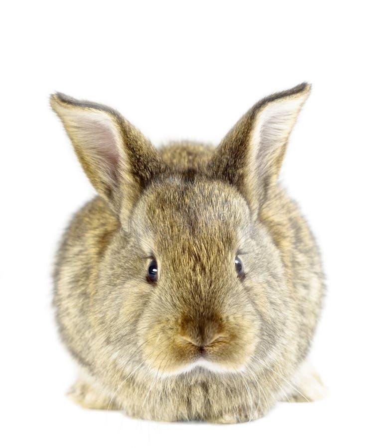 Rabbit 20 royalty free stock photos