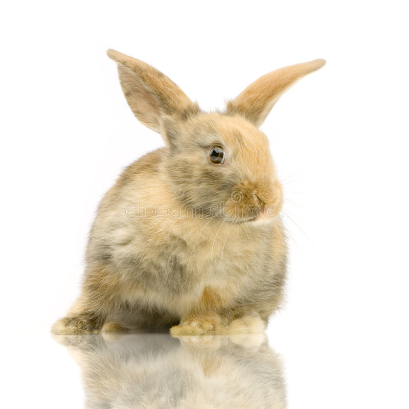 Download Rabbit stock image. Image of watching, face, animals, pretty - 2306443
