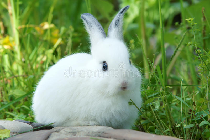 Download Rabbit stock image. Image of animal, pets, whisker, grass - 25665659
