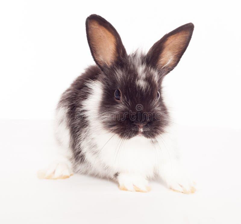 Download Rabbit stock photo. Image of cuddly, close, huddle, animal - 26098600