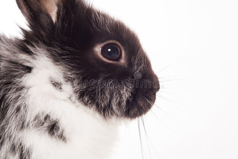 Download Rabbit Royalty Free Stock Photo - Image: 26098705
