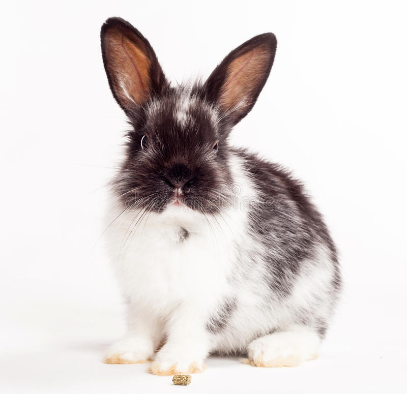 Rabbit. On a white background stock images