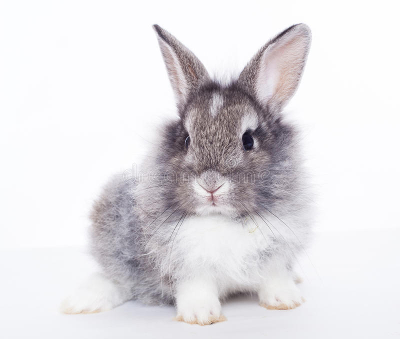 Rabbit. On a white background royalty free stock photos