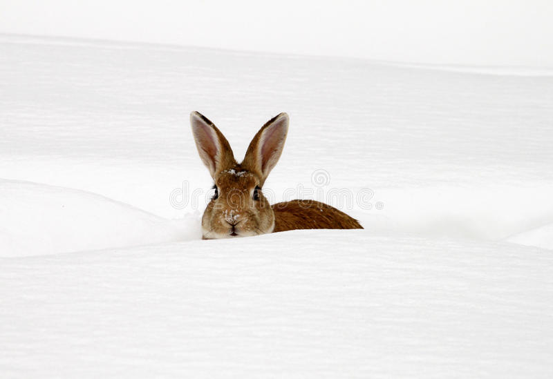 Download Rabbit stock image. Image of face, plush, park, rabbit - 26495049