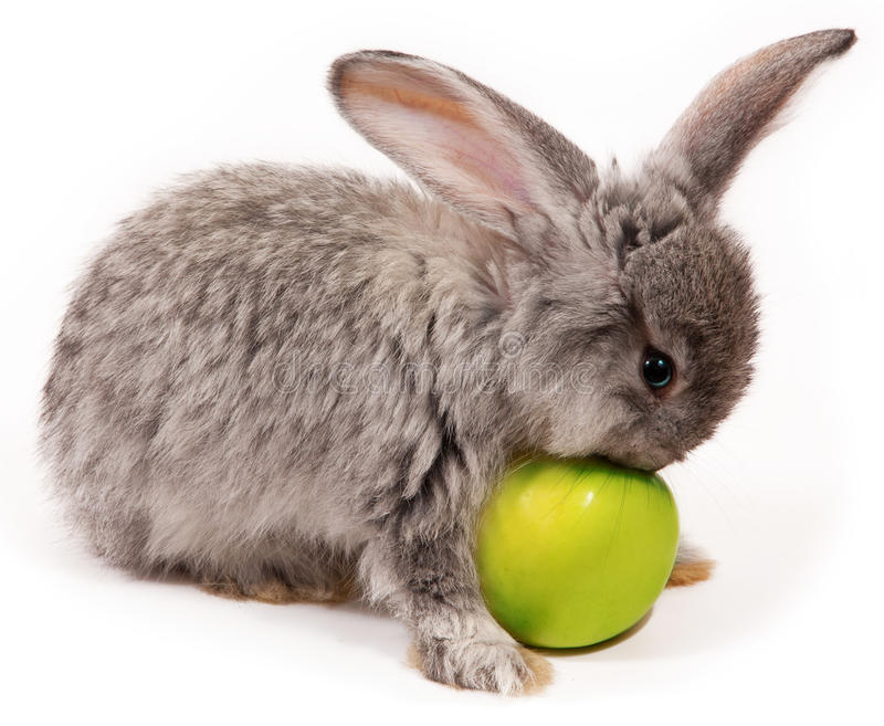 Rabbit. With apple on white background stock photos