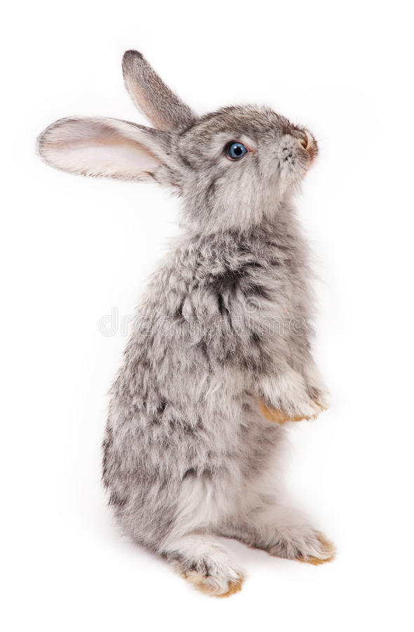Rabbit. On white background stock images