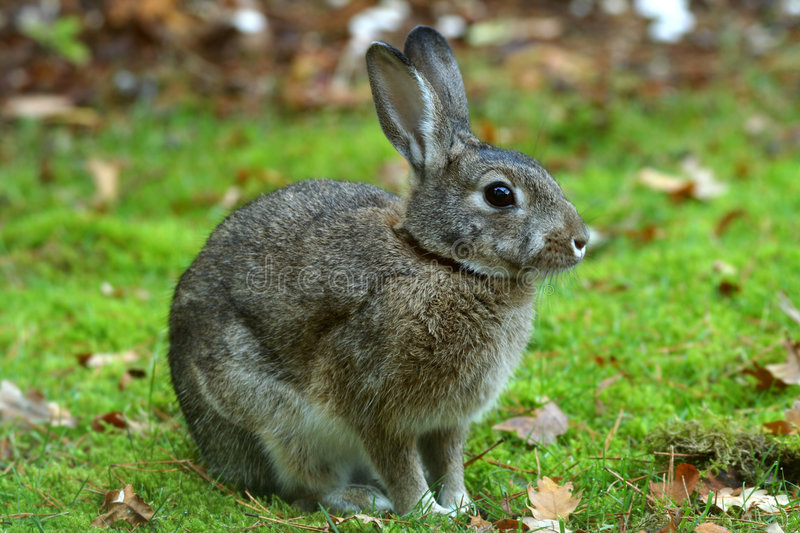 Download Rabbit stock image. Image of park, eyes, mammal, shade - 3841847