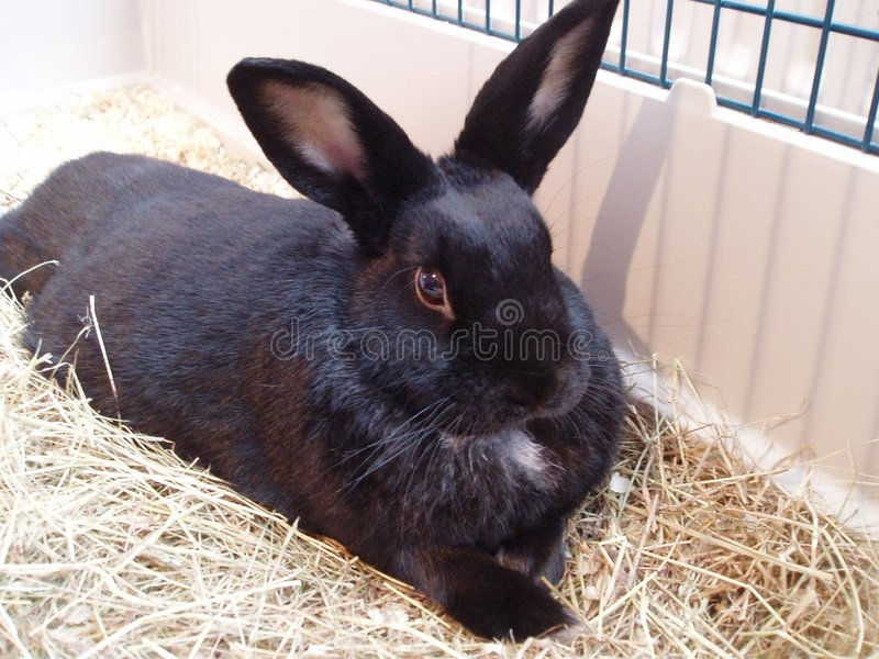 Download Rabbit stock photo. Image of bunny, bunnies, thumper, straw - 4871952