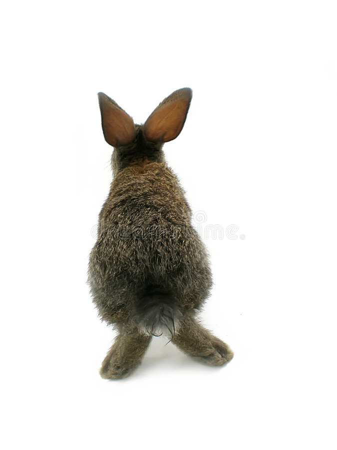 Download Rabbit Stock Images - Image: 5636004