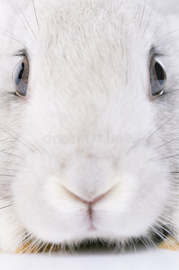Rabbit. Isolated on white background stock images