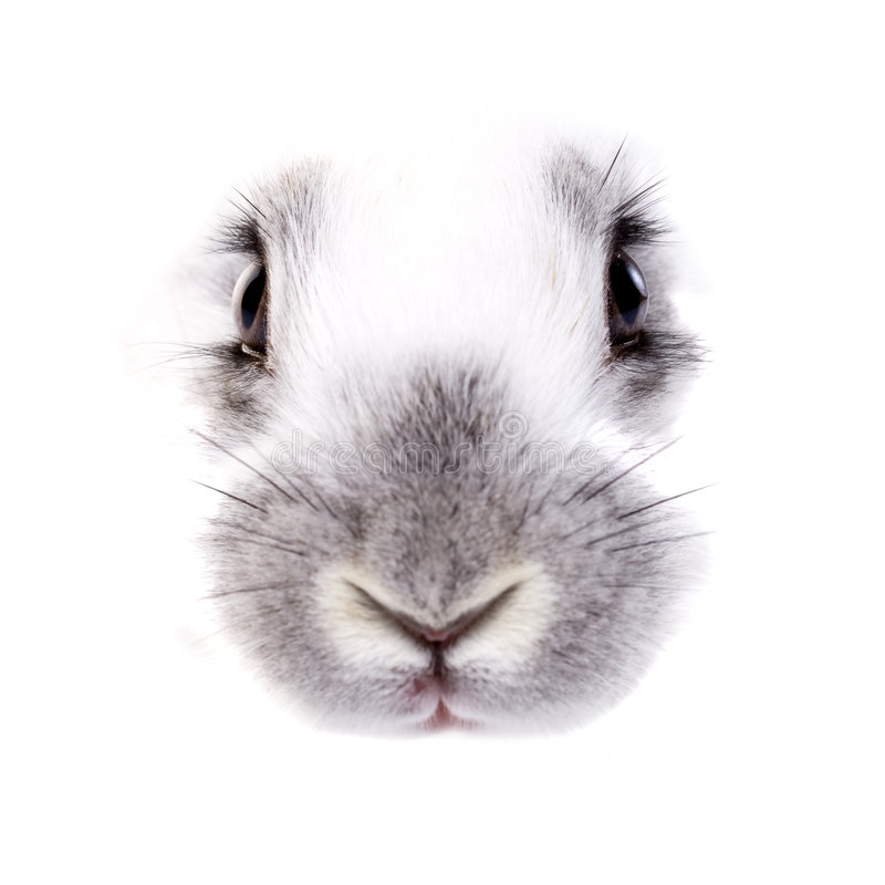 Rabbit. 's eyes and nose, isolated on white background royalty free stock photos