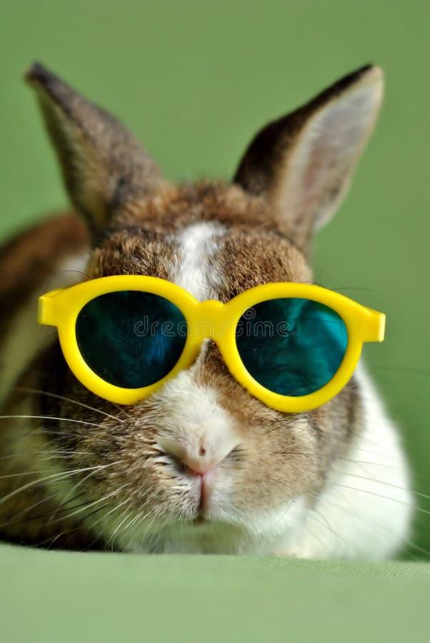 Free Rabbit Stock Photography - 85296572