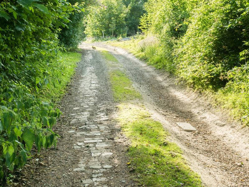 Rabbit on the pathway, Stanmer, East Sussex, UK stock image