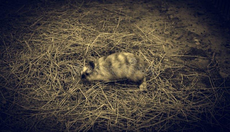 Rabbit angora farm stock photos