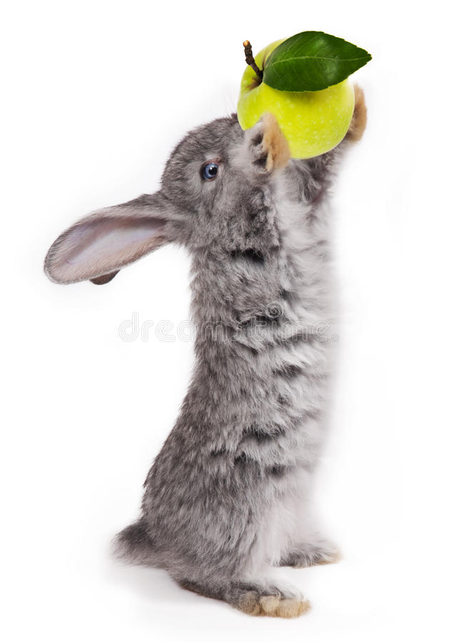 Rabbit. With apple isolated on white background royalty free stock photography