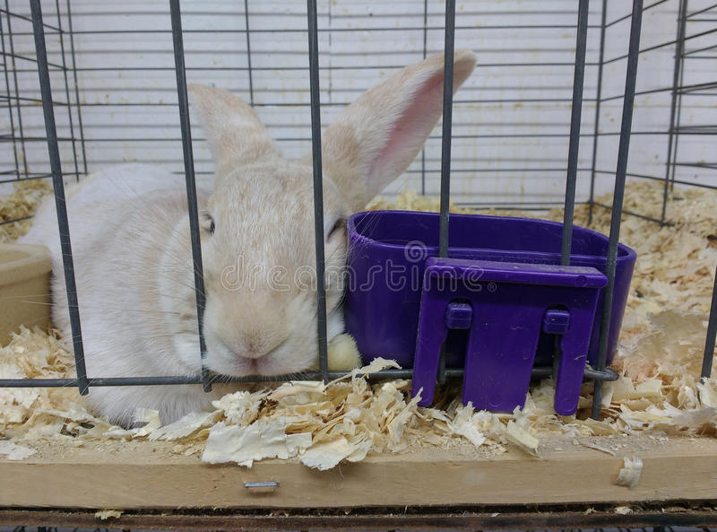 Rabbit Asleep in a Cage. A cute bunny, snuggled in his pine bedding, sleeps between his water dish and food dish royalty free stock images