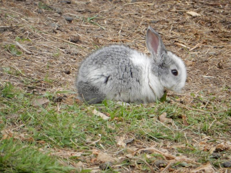 A rabbit royalty free stock images