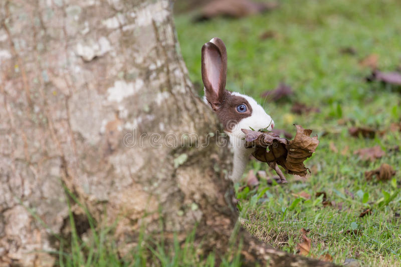 Rabbit behind the tree royalty free stock images