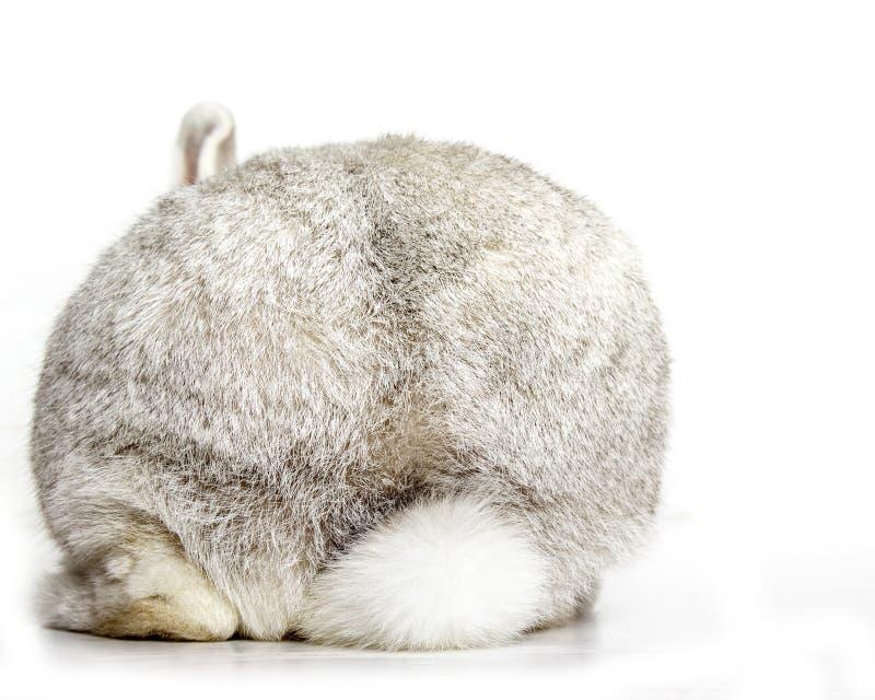 Rabbit bottom royalty free stock photography