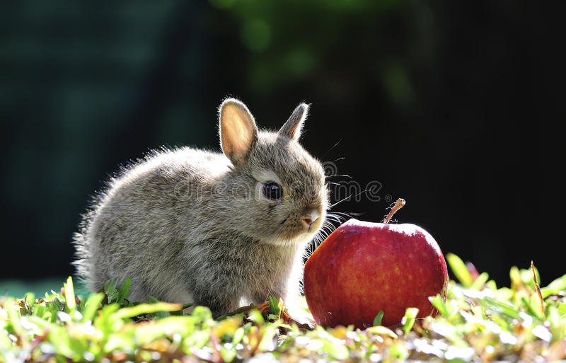 Download Rabbit stock photo. Image of hare, bunny, cute, adorable - 32823390