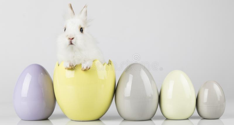 Rabbit, Bunny and easter Egg and white background royalty free stock images